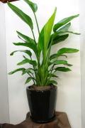 観葉植物 鉢カバーサンプル